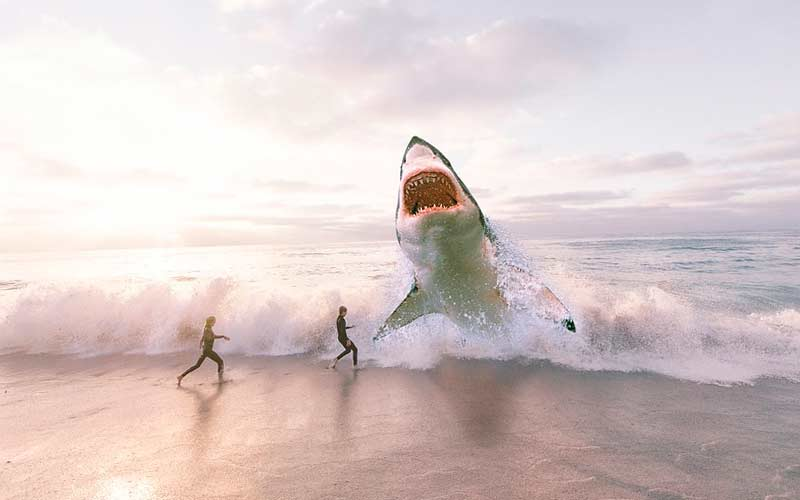 Самые большие акулы во всем мире