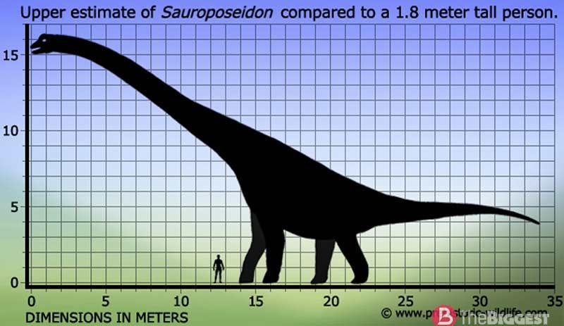 Сравнительные размеры динозавра и человека