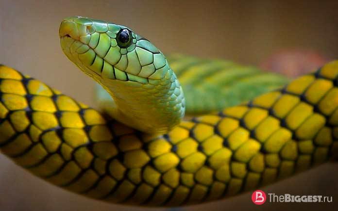 Красивая змея