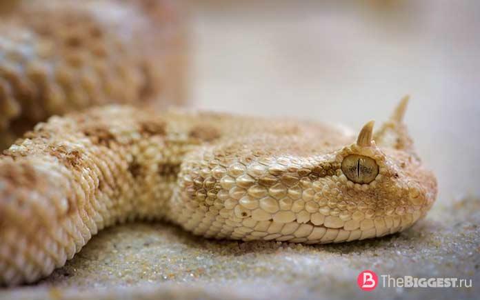 Самые крупные змеи