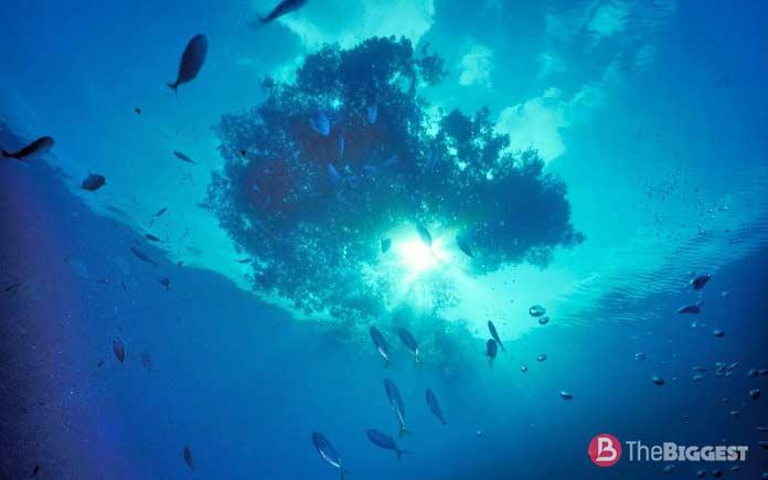 Саргассово море - самое большое на планете