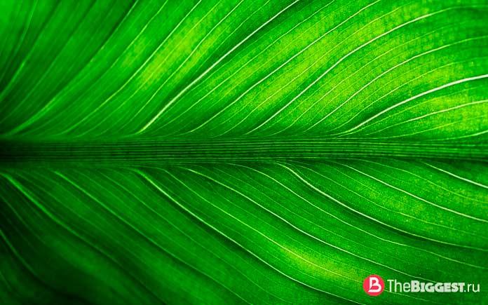 Самые большие растения в мире