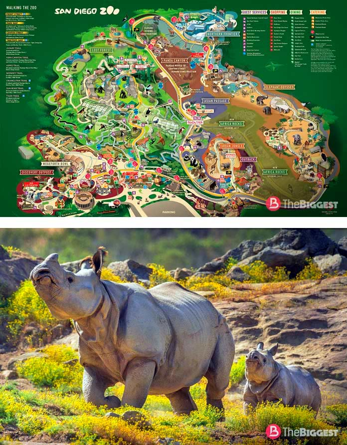 Зоопарк в Сан-Диего
