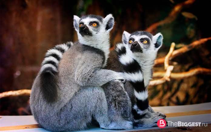 Самые большие зоопарки мира