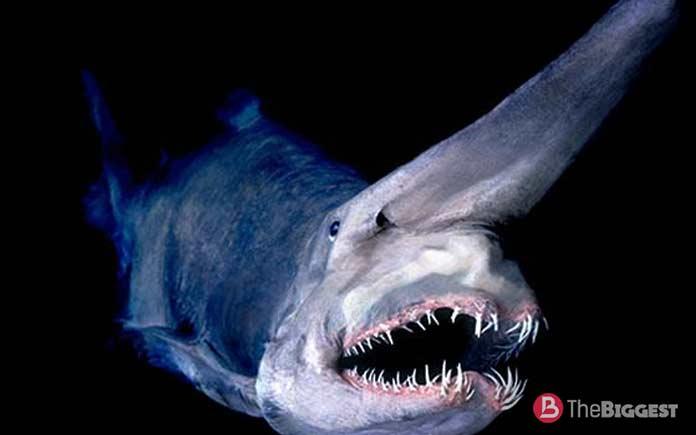Самое глубокое место планеты: Акула-домовой