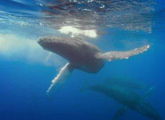 Крупные киты