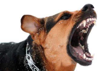 Самые опасные собаки в мире