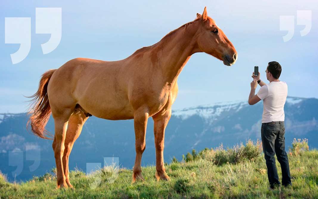 Самые большие лошади в мире. CC0