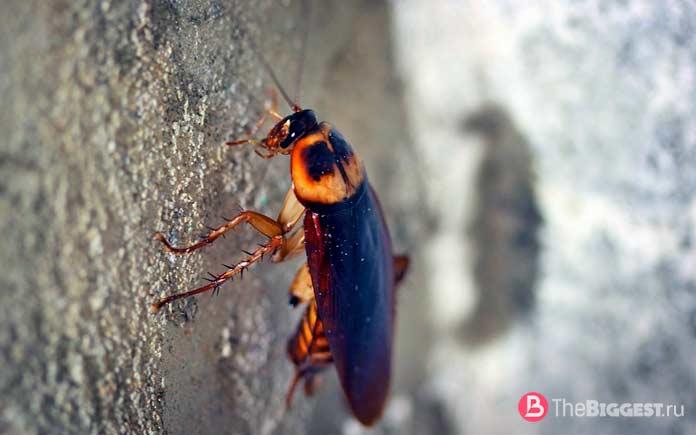 Тараканы - очень опасные насекомые. CC0