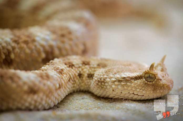 Змеи могут долго обходиться без еды. CC0