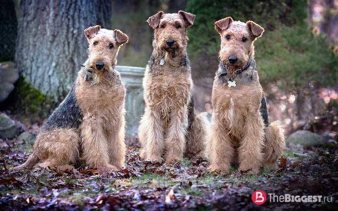 Собаки Родденберри