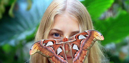 Самые большие бабочки