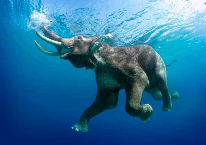 Крупнейшие млекопитающие