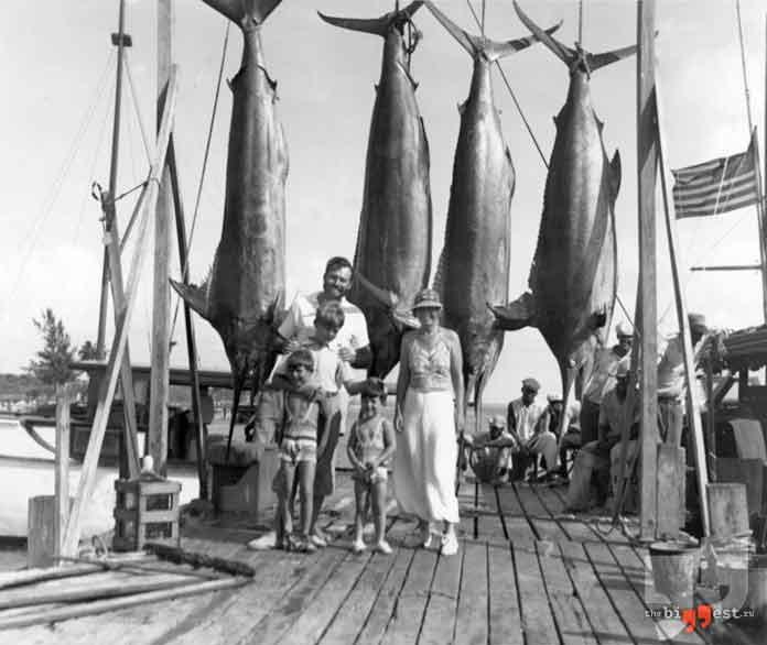самые большие рыбы: голубой марлин. CC0