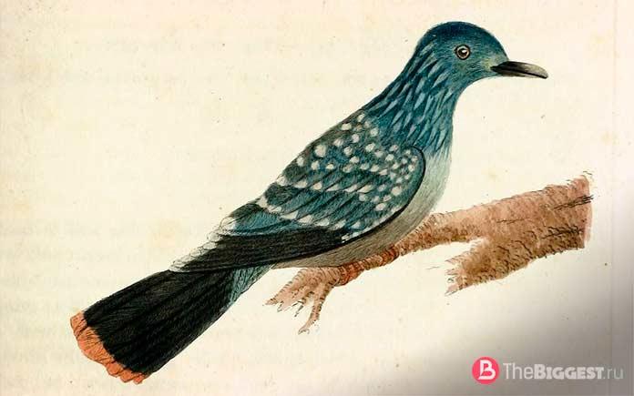 Зеленый голубь