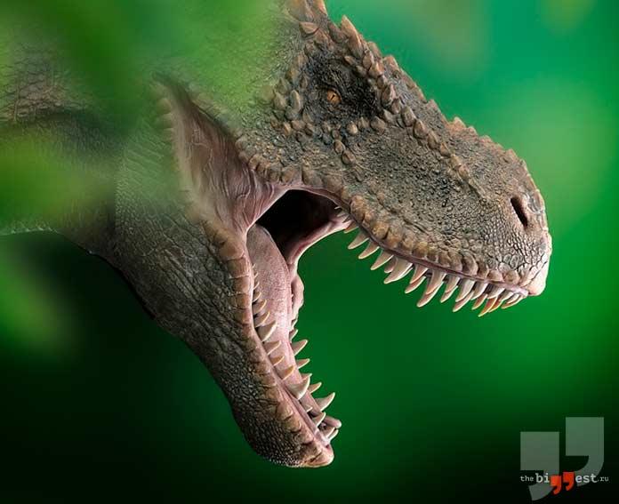 Зубы динозавра. CC0