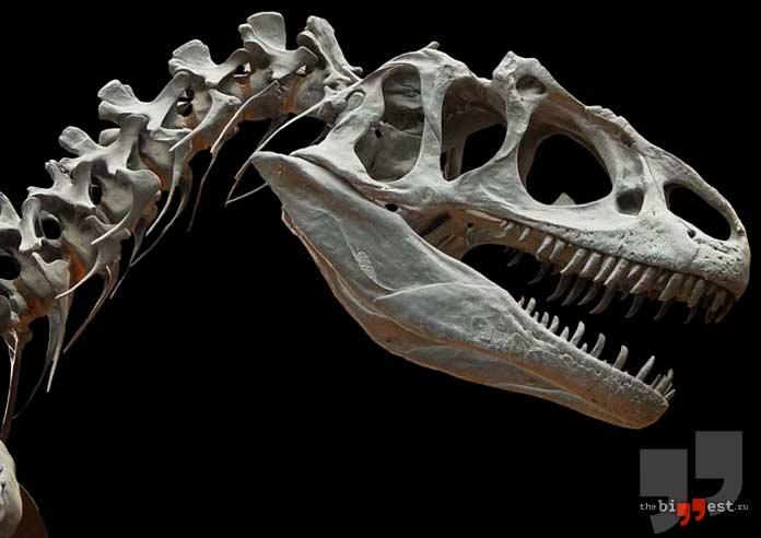 Кости аллозавра. CC0