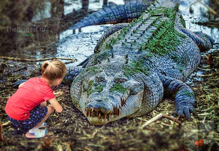 Гребнистый крокодил. CC0