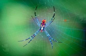 Паук на паутине. CC0