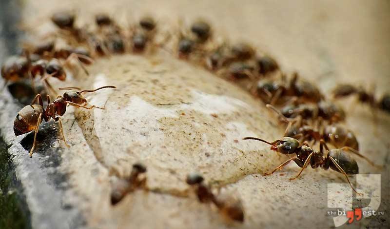 Проверка муравьями. CC0
