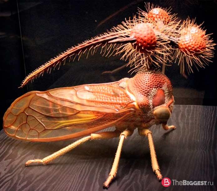Горбатка бразильская