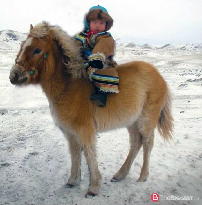 Маленькие монголы