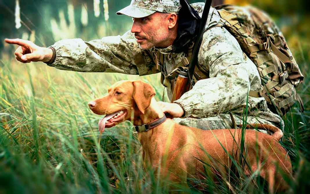 Самые популярные породы охотничьих собак