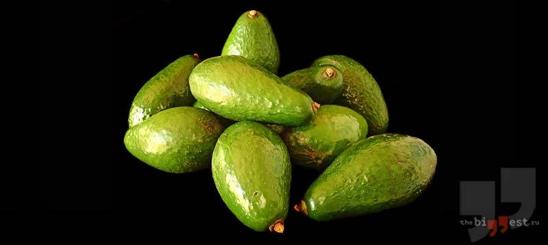 Полезные свойства авокадо сс0