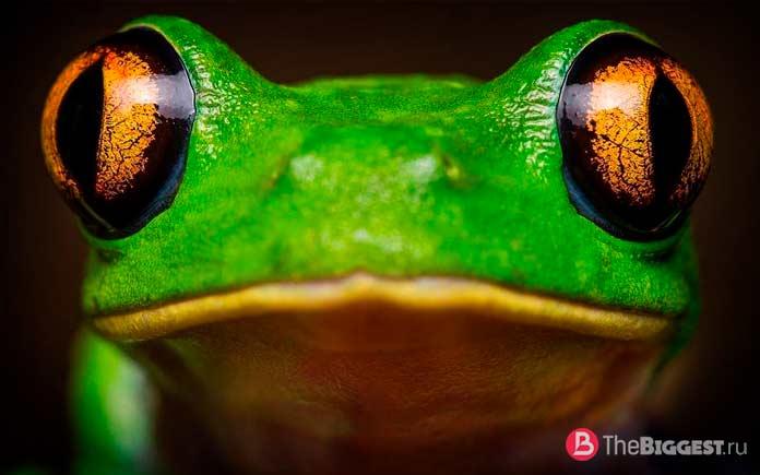 Зрение лягушек