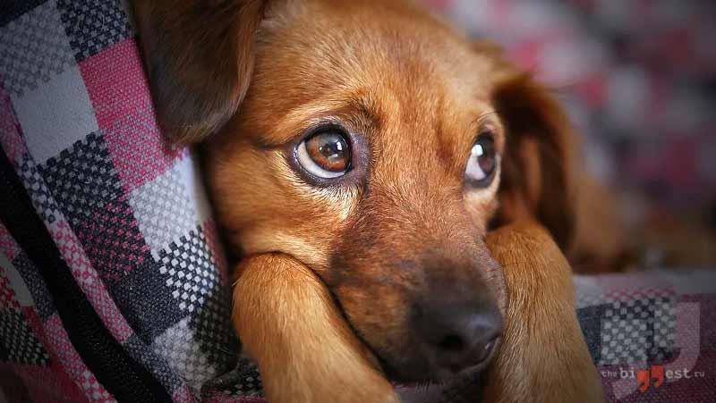 Самые добрые породы собак сс0