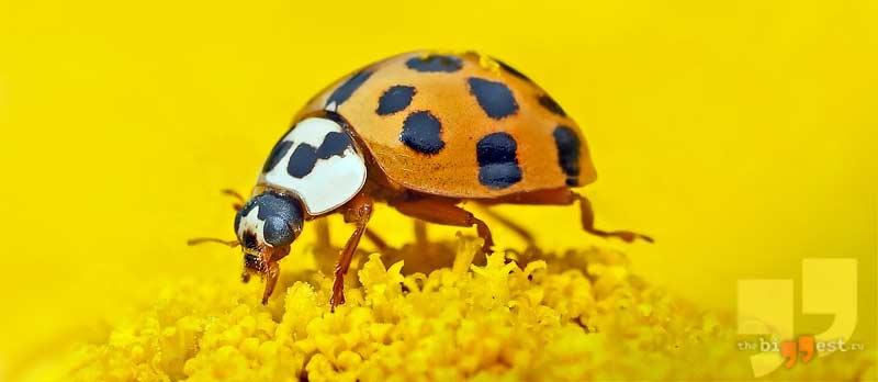 Различные насекомые сс00
