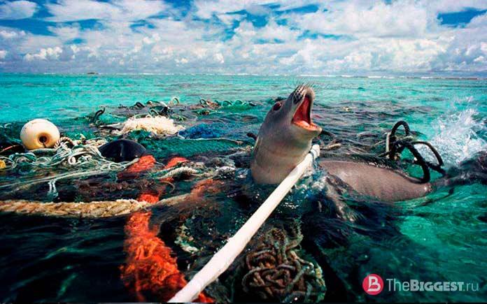 Тюлень в мусоре