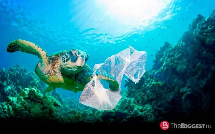Черепаха с мусором