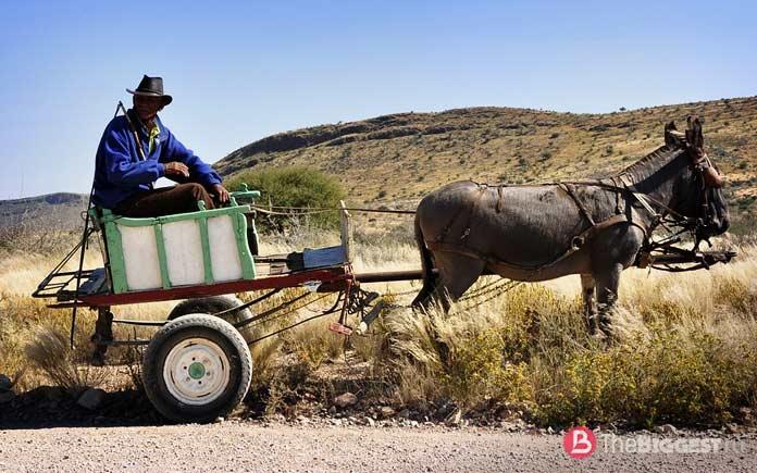Транспорт, движимый животными