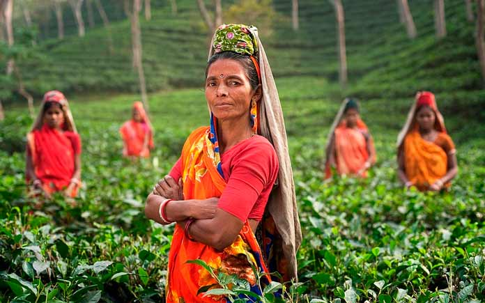 Лидеры по производству чая