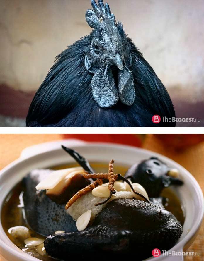 Чёрная курица Айям Цемани