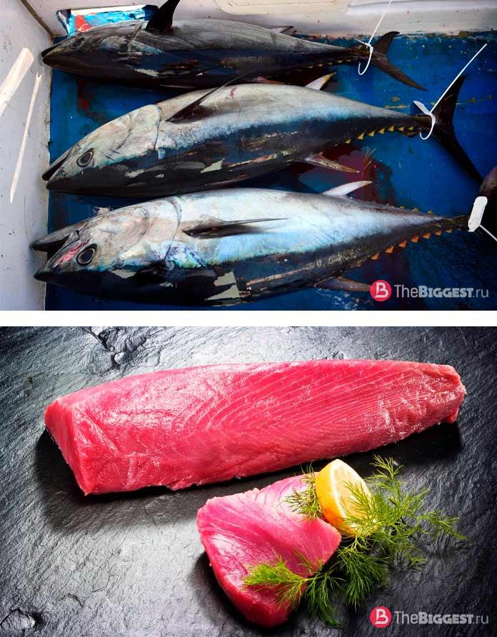 Голубой тунец. Список самых дорогих продуктов питания!