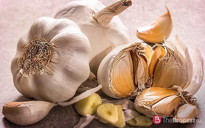 Чеснок - один из самых популярных овощей