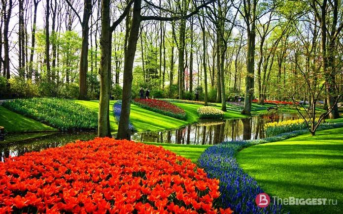 Королевский парк цветов Кёкенхоф - одно из мест, которые Вы должны увидеть в Нидерландах