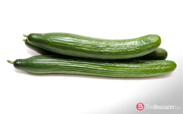 Огурец - один из самых популярных овощей