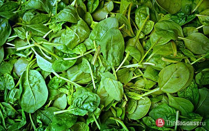 Шпинат - один из самых популярных овощей
