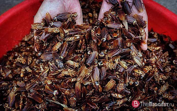 Китайские тараканы