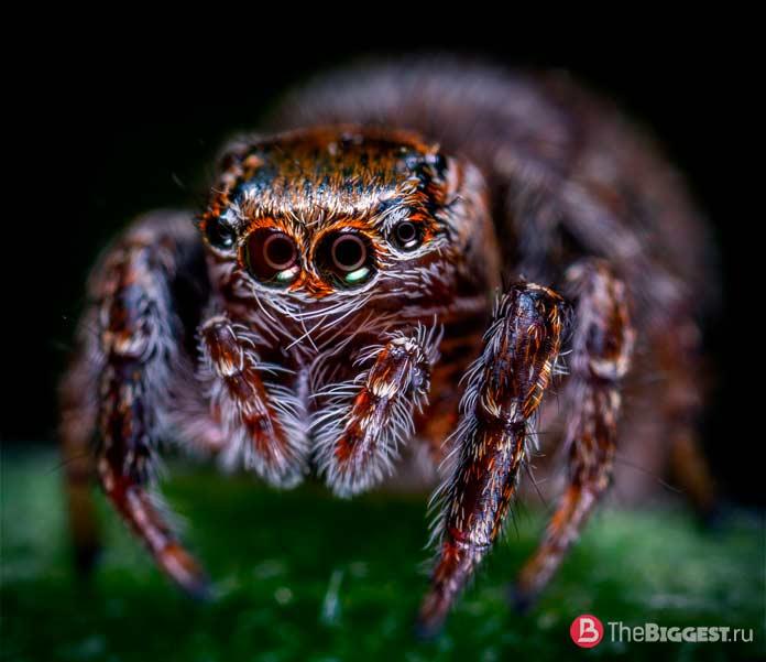 Красивые глаза пауков. CC0