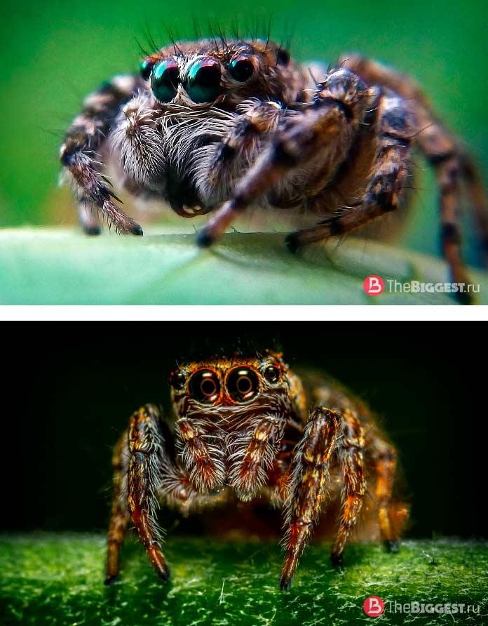 Удивительные глаза пауков. CC0