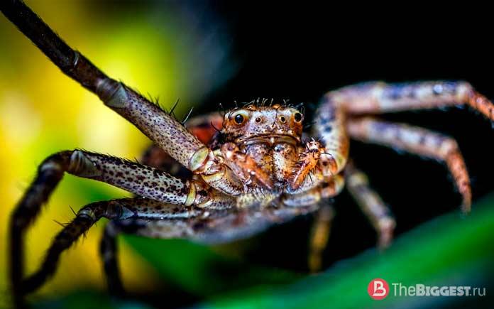Глаза и зрение пауков. СС0