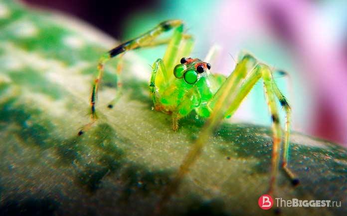 Удивительные глаза пауков: Особенности мировосприятия пауков. СС0