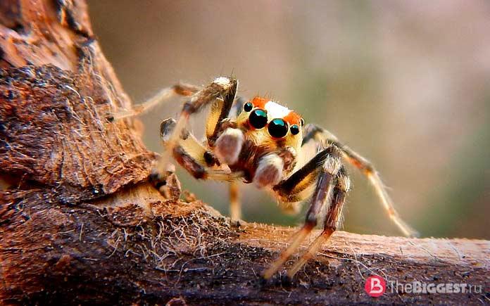 Преимущества зрения пауков. СС0