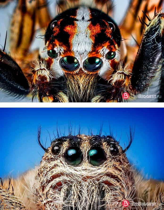 Удивительные глаза пауков: Сколько пар глаз у паука. СС0
