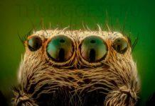 Spider Eyes. CC0