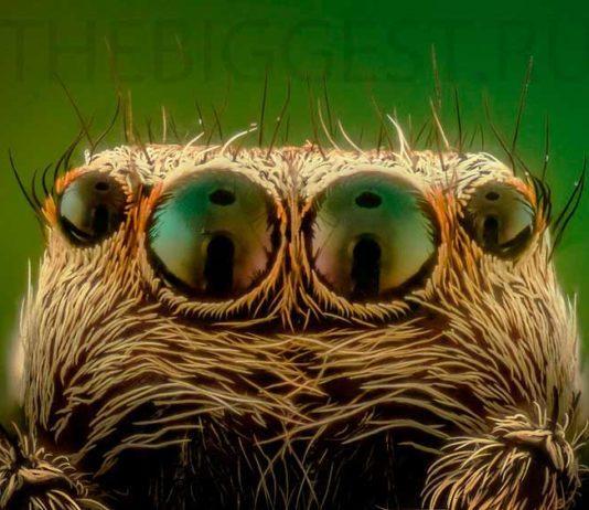 Spider Eyes. CC0